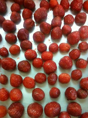 Strawberries ready to freeze
