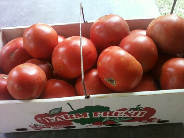 Tomatoes canning