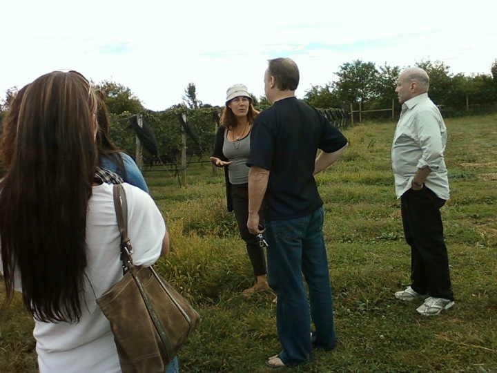 Mattebella vineyard tour