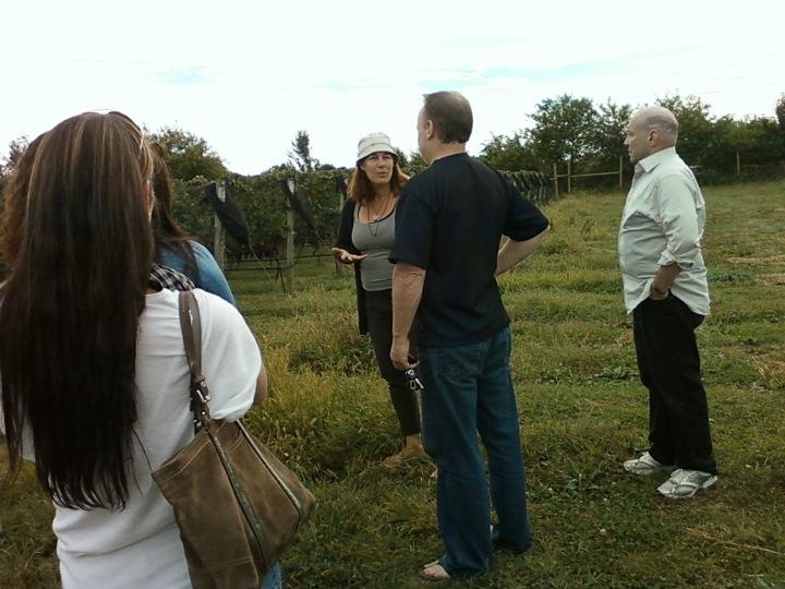 Mattebella vineyard tour