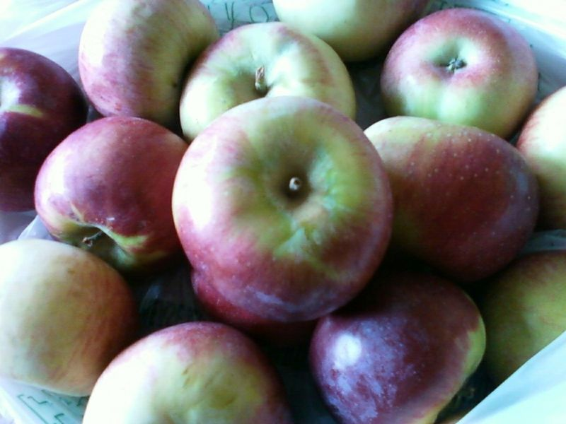 Oswego ontario orchards apples