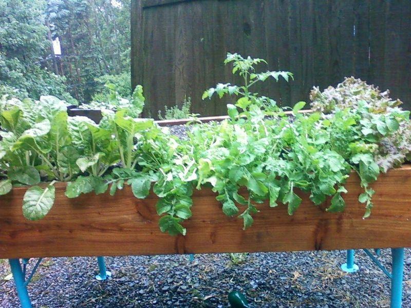 Garden box rain 06-06