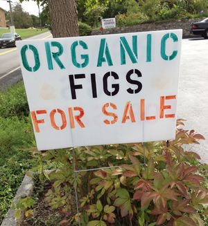 Figs local for sale