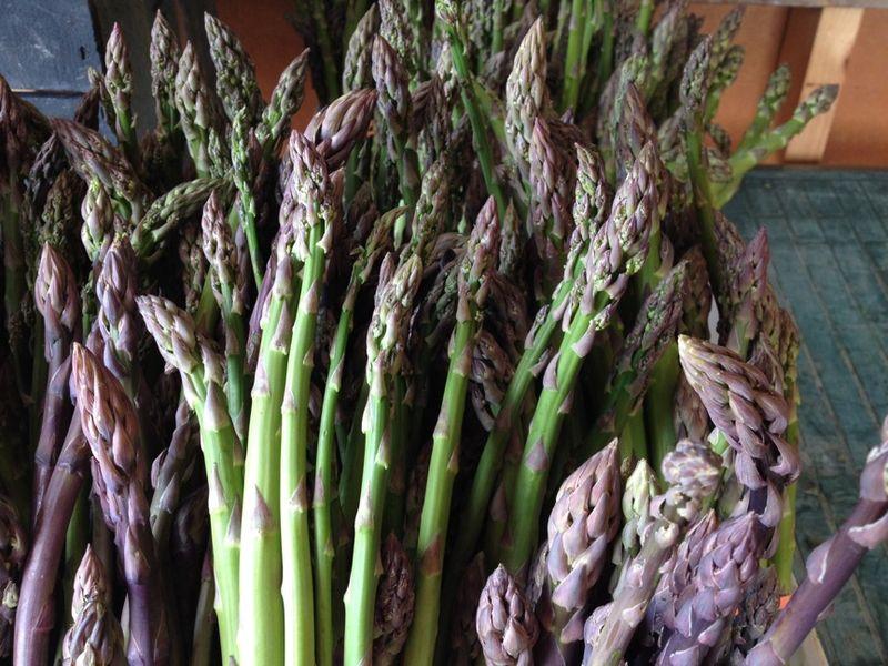 Asparagus tim's beauties H