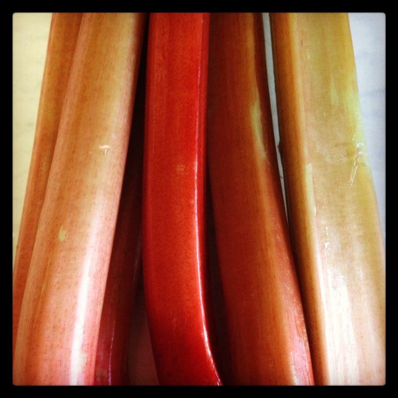 Rhubarb rainbow stalks