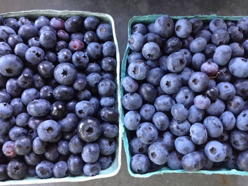 Blueberry jam berries Critz picked
