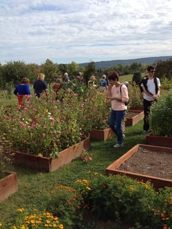 Eat First: Last call for Wegmans Organic Farm tours in 2014
