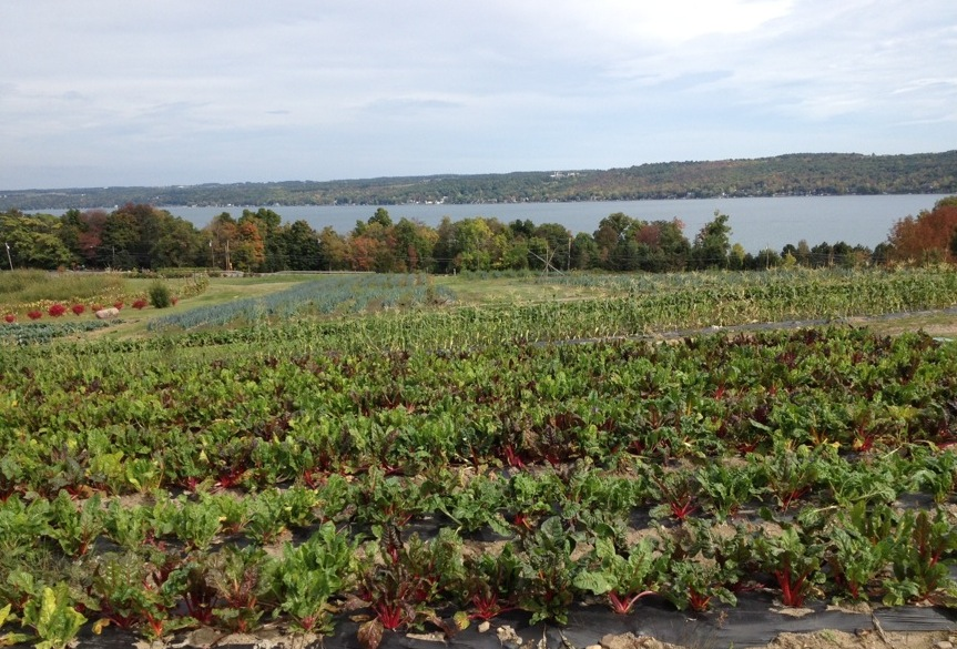 Perfect Wegmans Chard And View