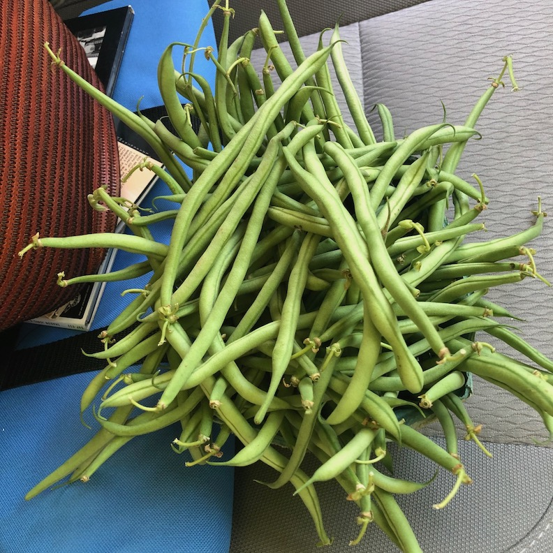 School house farms beans