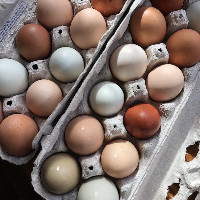 SVF eggs